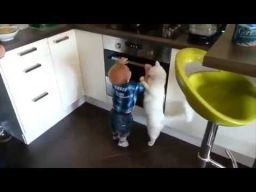 Heroic family cat protects toddler from hot stove