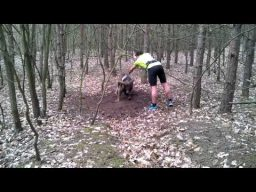 Trapped Mouflon (wild sheep) Rescued By Jogger